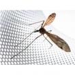 От комаров